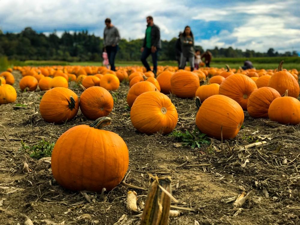 fall,pumpkin,harvest,festival,willamettevalley